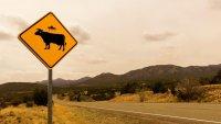 Най-смешните пътни знаци по света