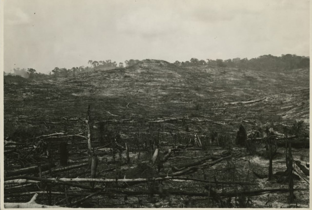 fordlandia trees after burning